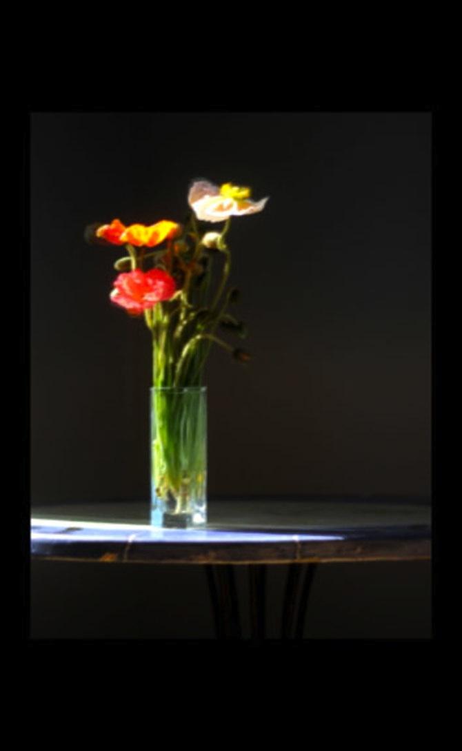 Dena_Ashbolt_Flowers_5