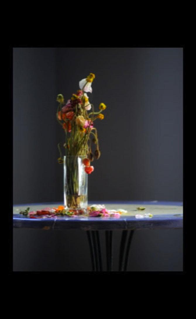 Dena_Ashbolt_Flowers_7